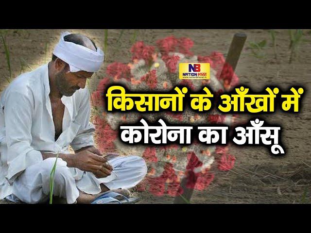 Rohtas में फसल की कटाई के लिए नही मिल रहे मज़दूर, खड़ी फसल बर्बाद देख किसानों के आँखों में आँसू