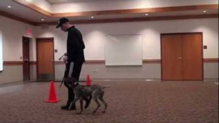 Mickey (german Shorthair Pointer) Puppy Camp Dog Training In Minnesota