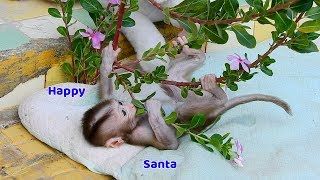 Orphan Santa happy time in the park - Very cute baby monkey learning to climb the tree