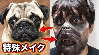 【ドッキリ】飼い犬と人間が入れ替わったら飼い主はどんな反応するの?