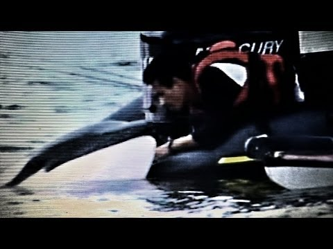 A Killer Whale Called Luna  *♥*♥*A Life Does not have to be Human to be Great*♥*♥*