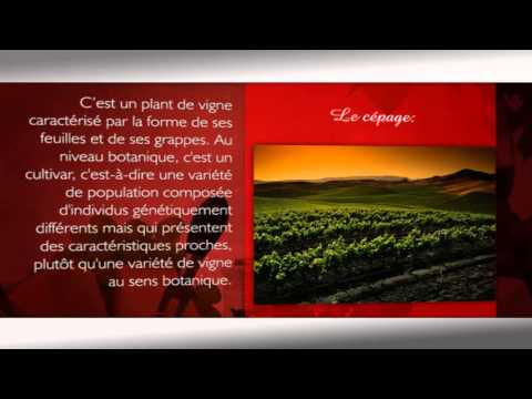 encyclopedie-vin-cepage- Vidngo