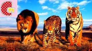 ❤ САМЫЕ ОПАСНЫЕ ЗВЕРИ АФРИКИ. ЦИРК ❤ MOST DANGEROUS ANIMALS OF AFRICA. CIRCUS