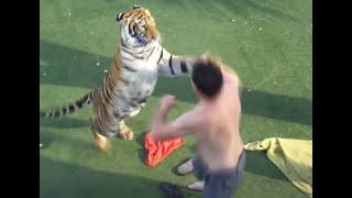 動物クイズ どちらが強い ライオン キリン ハイエナ 犬 狩り 熊 ヒョウ リカオン トラ ネコ 鳴き声