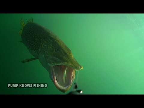 10 Minutes of Underwater Pike Strikes – Water Wolf Underwater Camera