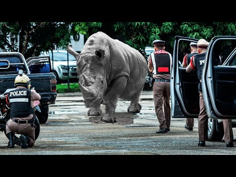 10 Wild Animals That ESCAPED From The Zoo!