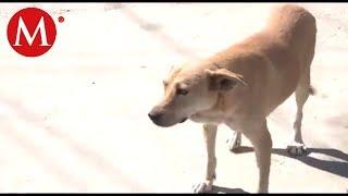 Canelo, el perro que descubrió un homicidio en Torreón