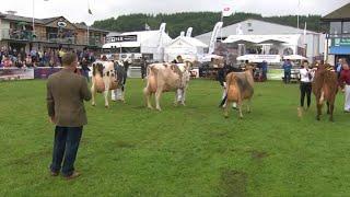 Pencampwriaeth Buwch Odro | Dairy Cow Championship