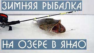 Зимняя рыбалка на озере в ЯНАО Апрель 2021 DF 65