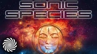 Sonic Species - Zero (Outsiders Remix) | Tip World