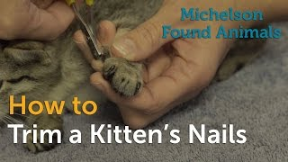 How to Trim a Kitten's Nails