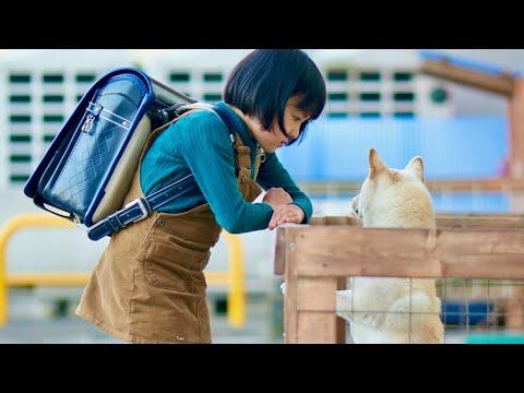 """新たな""""天才子役""""新津ちせの光る演技!犬のルーとの出会い/映画『駅までの道をおしえて』本編映像"""