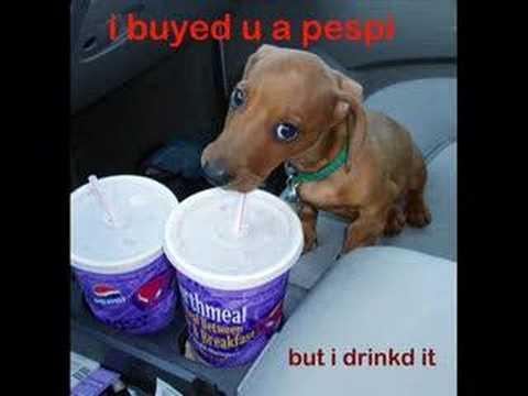 super funny dog pictures !