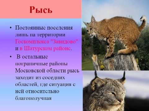 Красная книга М.О.(животные) презентация