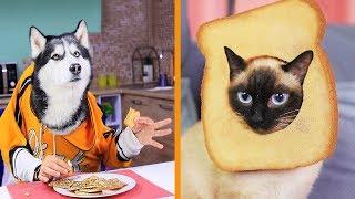 22 Bromas Graciosas y Asombrosos Trucos Para La Vida Con Perros y Gatos