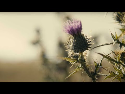 StAC: Centenary Film - The Spirit of St Andrew's