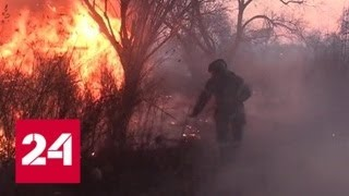 Смотреть видео Лесные пожары: большинство возгораний - из-за неосторожного обращения с огнем - Россия 24 онлайн