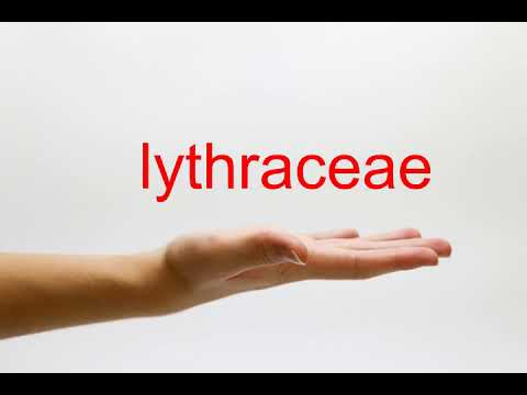 How to Pronounce lythraceae - American English