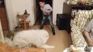 Танцующий пёс Элвис)))