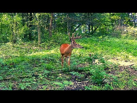 2019 Kentucky Early Muzzleloader Hunts