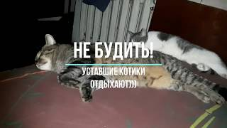 КоТиГад котики спят котики смешные котики приколы котики милые смешные животные