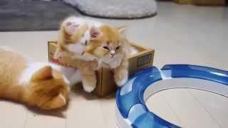 Мама кошка ласкает своих котят!