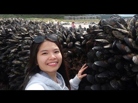 Vlog 332  Nghêu, Sò, Rong Biển, Sao Biển, Ốc Móng Quỷ Bám Đầy Vách Đá Như Mê Cung
