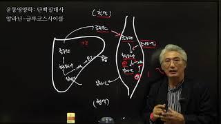 #116 운동영양학, 단백질대사,알라닌 글루코스사이클(…