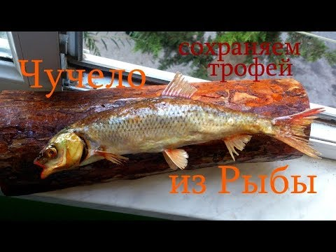 Как в домашних условиях сделать чучело рыбы