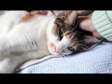 Cuddling May, the Cat (ASMR whispering)