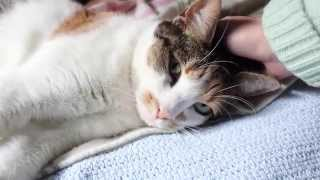 Cuddling May, the Cat (ASMR whispering)