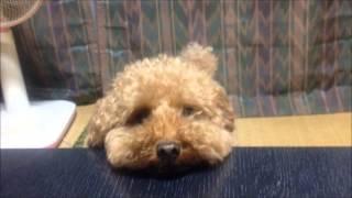 かわいいペット動画~ 癒し動画をアップしています。 チャンネル登録お...
