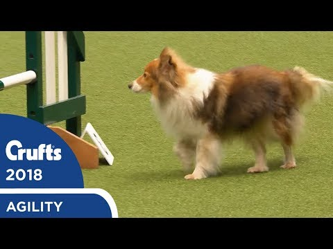 Agility - Crufts Team - Small Final Part 1 | Crufts 2018