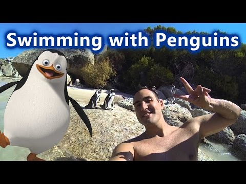 Swimming with Penguins - Boulders Beach