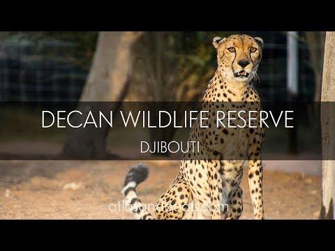 Decan wildlife reserve in Djibouti