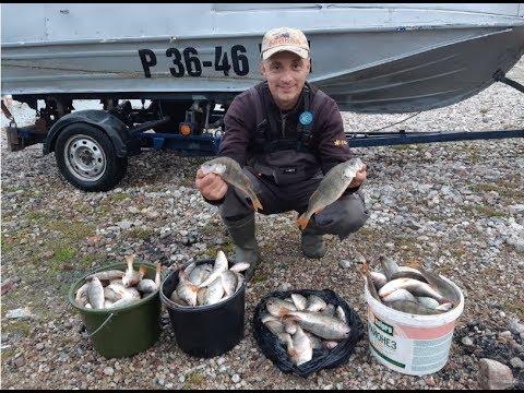 Осенний жор окуня. Надубасили нормально. Рыбалка на Куршском заливе.