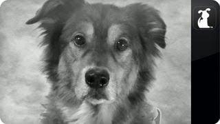 Kennel No. 5 - Brad Pitt Chanel No. 5 Ad #KennelNo5