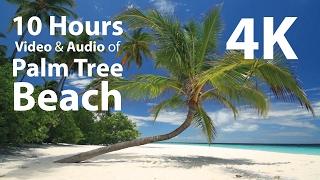 4K UHD 10 hours - Tropical Beach & Gentle Birds/Waves Audio window - relaxing, meditation, nature