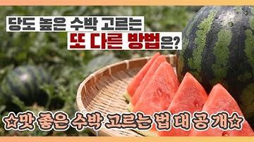 ☆맛 좋은 수박 고르는 법 대 공 개☆