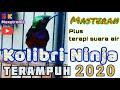 Masteran Untuk Kolibri Ninja Macet Terampuh Suara Audio Terjernih U Konin Macet Terapi Air  Mp3 - Mp4 Download