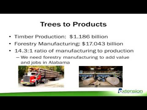 Economic Impact of Agriculture & Forestry