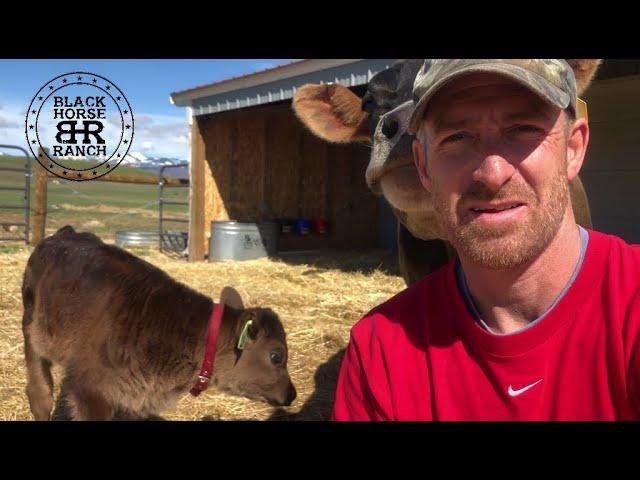 Historic Guest Barn Renovation - Episode 11, Framing the Final Bearing Wall