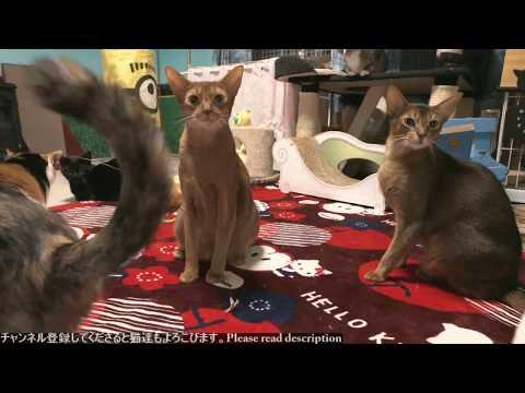 2018.11.10 猫日記   Cat's diary. November 10, 2018 【Miaou みゃう】