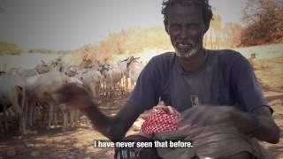 Somalia: Pastoralists struggle to survive under a severe drought
