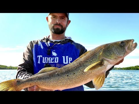 Minnesota Walleye Fishing (BIG BAIT BIG FISH)
