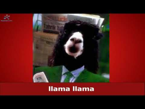 The Llama Song (lyrics)