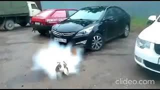 Ебанутая аниме девка взорвала собаку пальцем