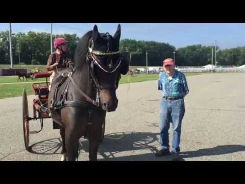 Carriage Driving with Tim Morrell at the Massachusetts Morgan Horse Show 2016