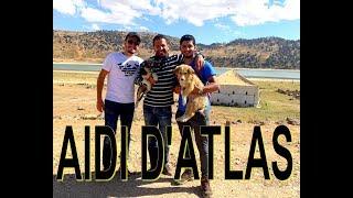 رحلة البحث عن كلب الاطلس المغربي Aidi de l'atlas