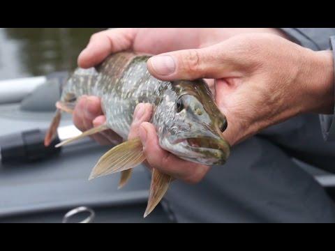 необычные факты о рыбалке